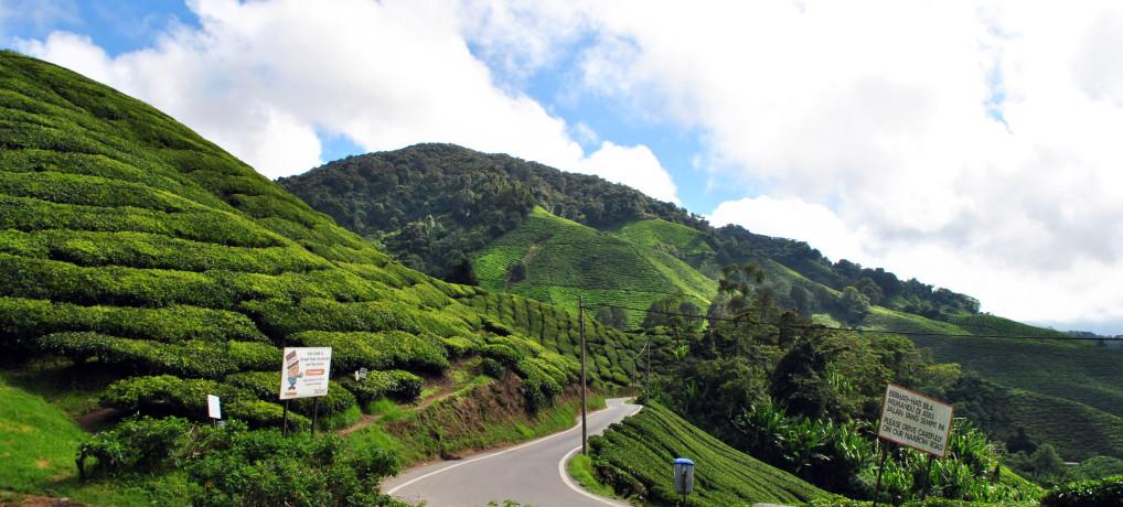 Relacja z podróży do Singapuru i Malezji cz.4  – Cameron Highlands