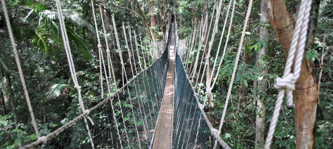 Relacja z podróży do Singapuru i Malezji cz.5 – wizyta w Taman Negara