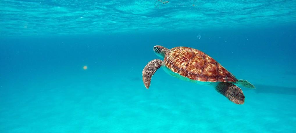 Relax. You're in Barbados! Wakacje na Karaibach cz.3 – Plaże na Barbadosie