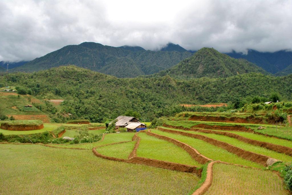 Tarasy ryżowe Wietnam 4