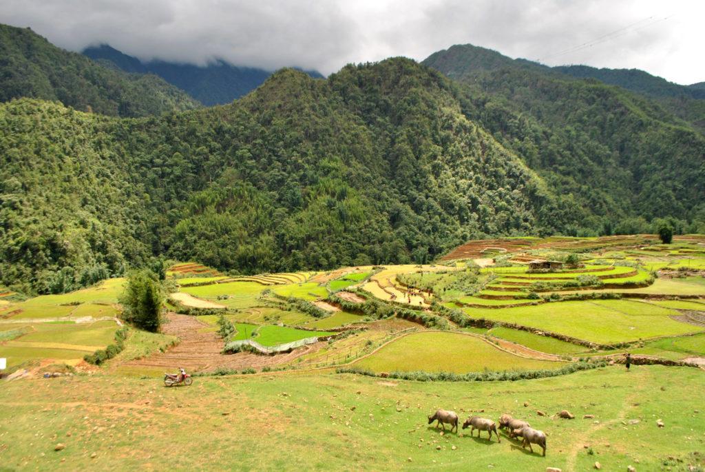 Tarasy ryżowe Wietnam 3