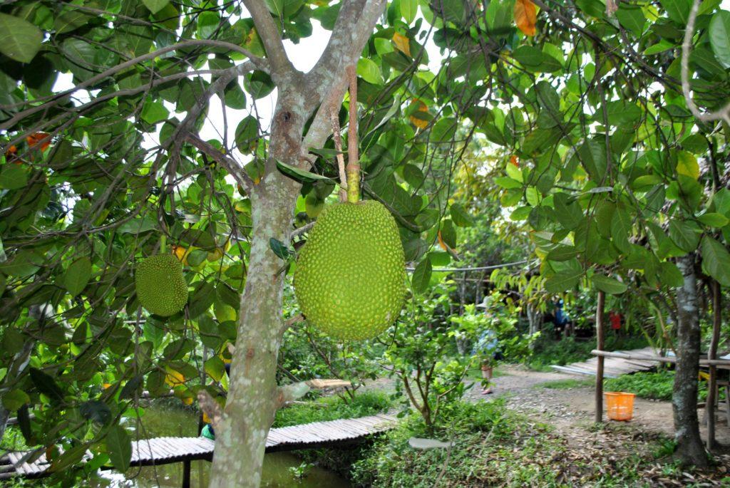 Jakcfruit