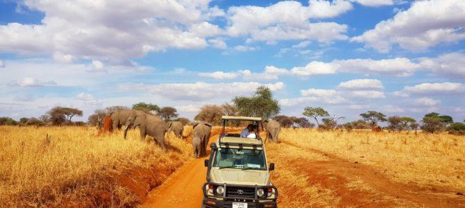 Jak zorganizować safari z Zanzibaru?