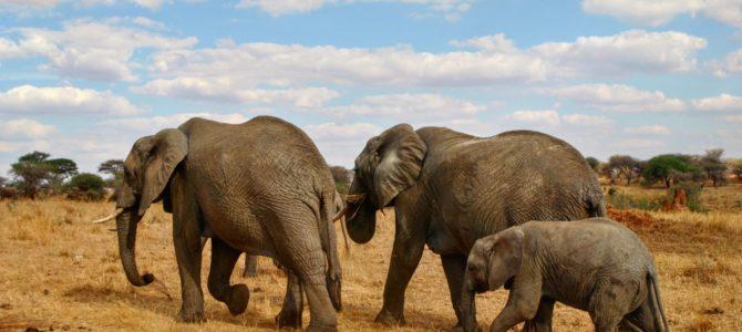 Safari w Tanzanii cz.2 Park Tarangire