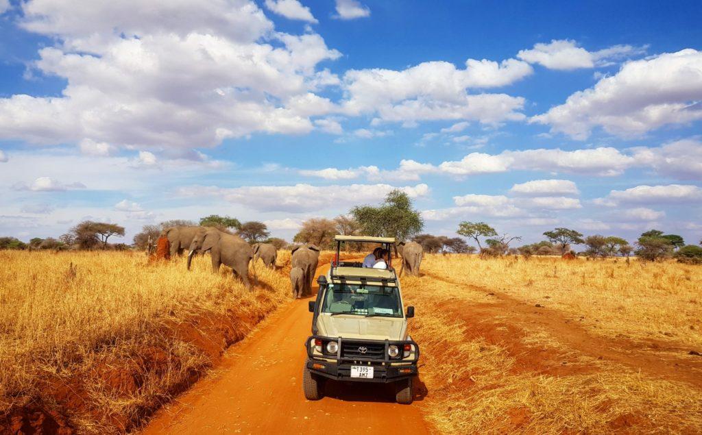 słonie na drodze
