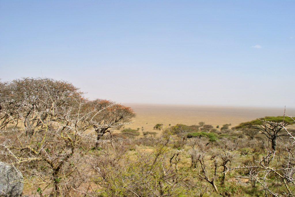 Wyschnięte Serengeti