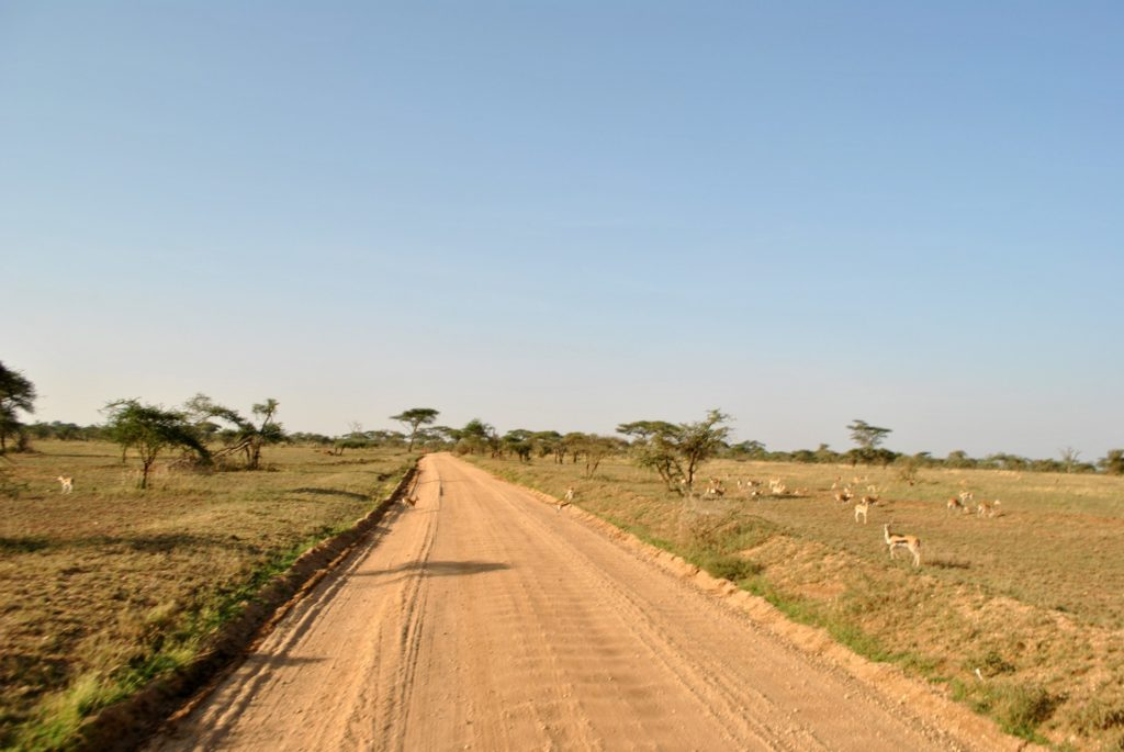 droga w serengeti