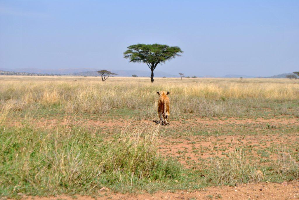 Ranny Lew Park Serengeti