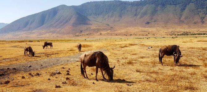 Safari w Tanzanii cz.4 – Ngorongoro